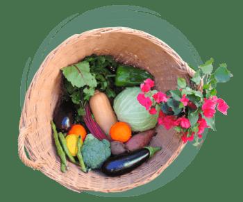 cesta ecologica los tamayos 2