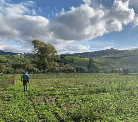 huerto ecologico cadiz los tamayos